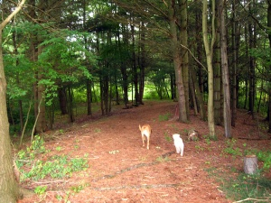 dogs_forest