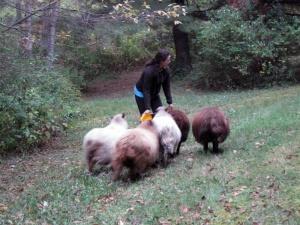 tee_sheep